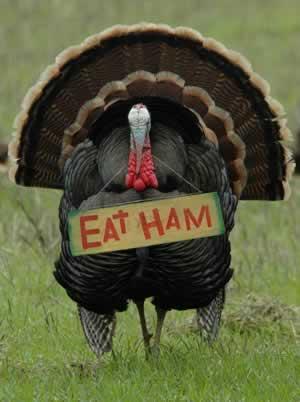 eat_ham_434619.jpg